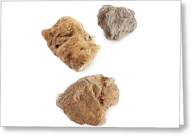 Martian Meteorites Greeting Card by Science Photo Library