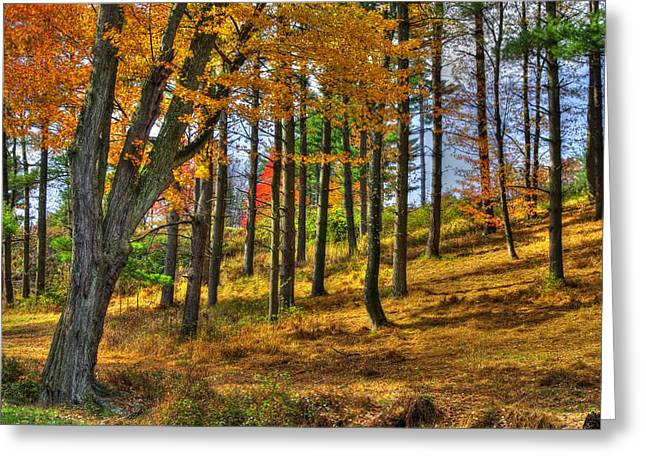 Mt. Airy Greeting Cards - Maryland Country Roads - A Blaze Without Fire Greeting Card by Michael Mazaika