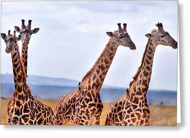 Hdr Photos Greeting Cards - Masai Giraffe Greeting Card by Adam Romanowicz