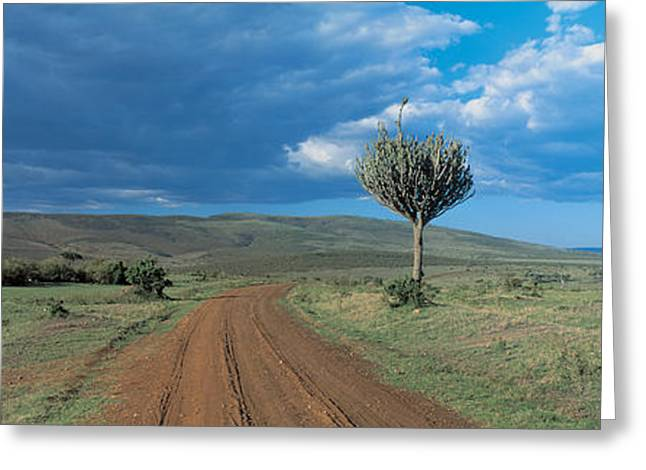 Rut Greeting Cards - Masai Mara Game Reserve Kenya Greeting Card by Panoramic Images