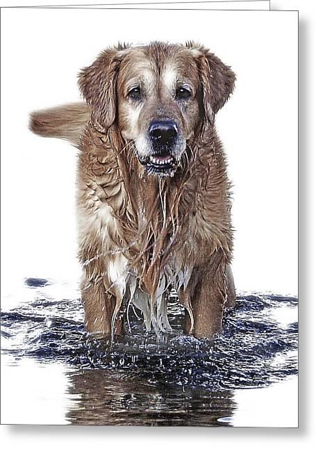 Master Of Wet Elements Greeting Card by Joachim G Pinkawa