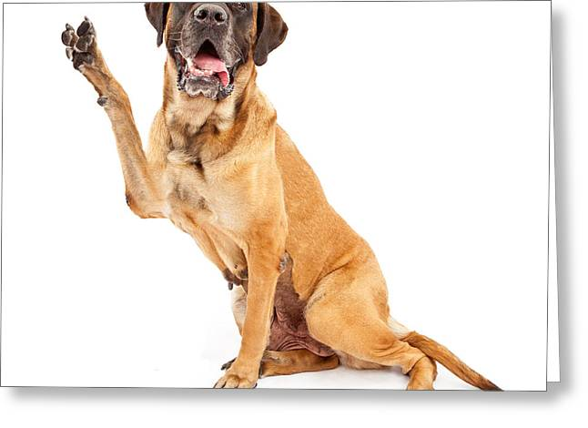 Full-length Portrait Greeting Cards - Mastiff Dog With Paw in Peace Sign Greeting Card by Susan  Schmitz