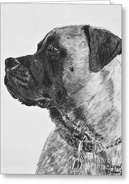 Apricot Drawings Greeting Cards - Mastiff In Profile Greeting Card by Kate Sumners