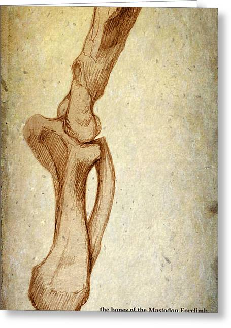Geology Drawings Greeting Cards - Mastodon Leg Bones Greeting Card by Paul Gioacchini