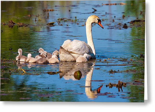 Metro Park Greeting Cards - Maternal Reflection  Greeting Card by James Marvin Phelps
