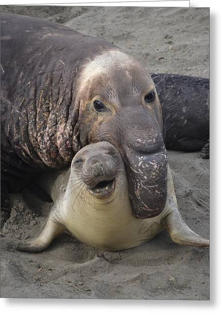 Cambria Greeting Cards - Mating Fun Greeting Card by Christine Owens