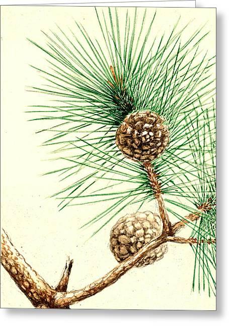 Matsu Greeting Cards - Matsu Pine 1870 Greeting Card by Padre Art