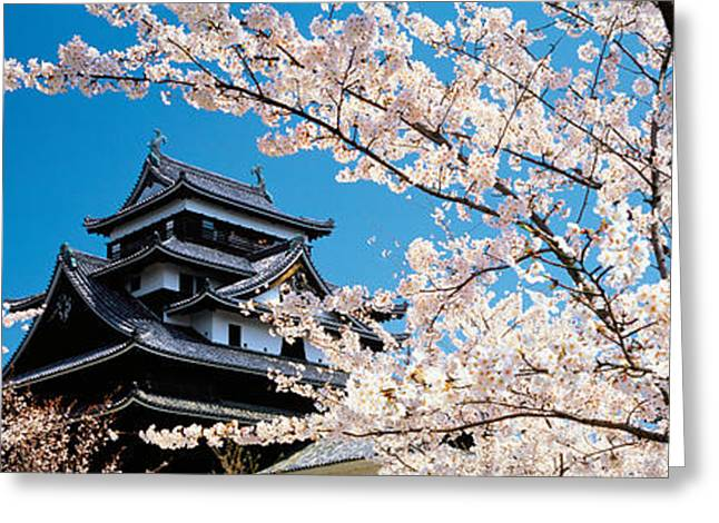 Flower Blooms Greeting Cards - Matsue Castle Cherry Blossoms Shimane Greeting Card by Panoramic Images