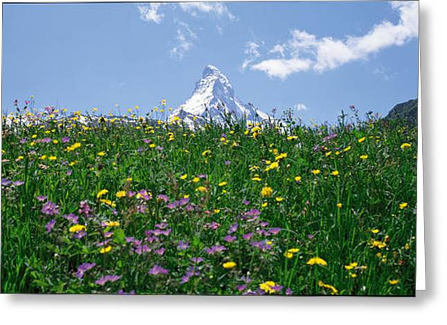 Snow Blossom Greeting Cards - Matterhorn Switzerland Greeting Card by Panoramic Images