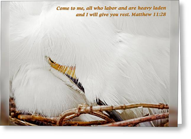 Close-up Greeting Cards - Matthew 11 28 Greeting Card by Dawn Currie