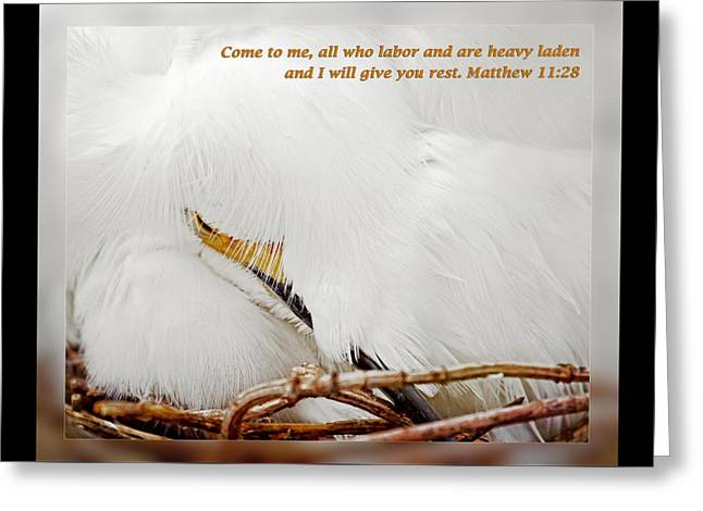 Inspirational Wildlife Prints Greeting Cards - Matthew 11 28 Greeting Card by Dawn Currie