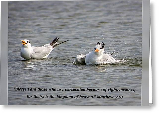 Tern Greeting Cards - Matthew 5 10 Greeting Card by Dawn Currie