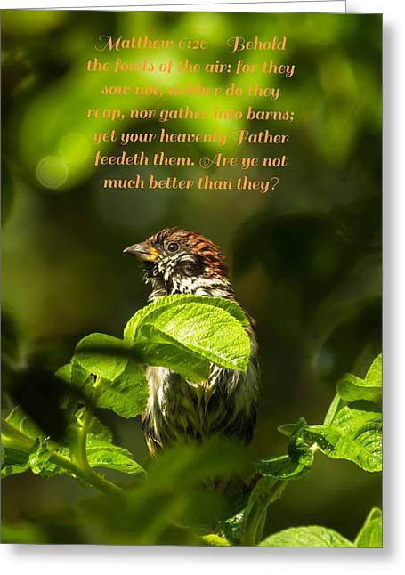 Bible Greeting Cards - Matthew 6 verse 26 Greeting Card by Rose-Maries Pictures