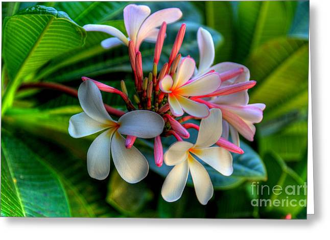 Tropical Photographs Greeting Cards - Maui Beauties Greeting Card by Kelly Wade