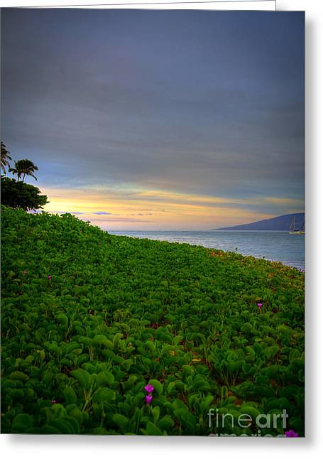 Beach Photographs Greeting Cards - Maui Morning Greeting Card by Kelly Wade