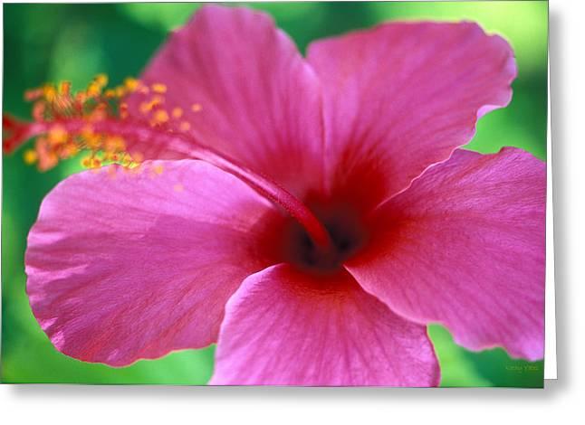 Pink Flower Prints Greeting Cards - Maui Pink Hibiscus Greeting Card by Kathy Yates