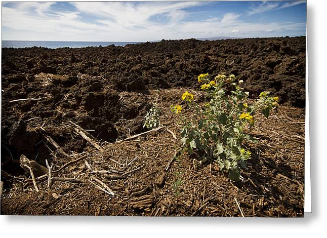 Perouse Greeting Cards - Mauis Lava Fields 1 Greeting Card by Jessica Velasco