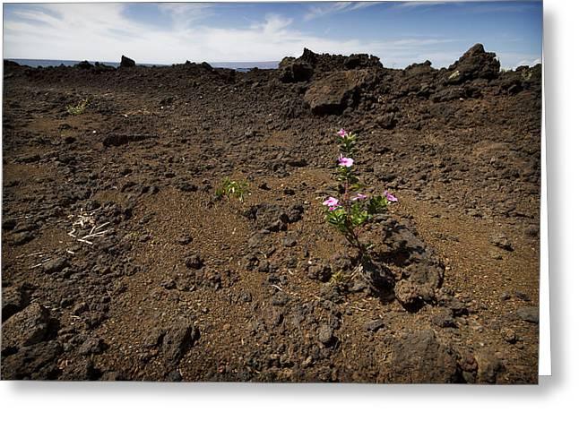 La Perouse Bay Greeting Cards - Mauis Lava Fields 2 Greeting Card by Jessica Velasco