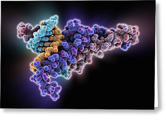 Helix Greeting Cards - Max transcription factor-DNA complex Greeting Card by Science Photo Library