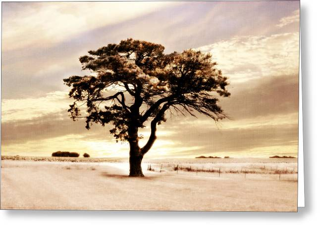 Sunset Greeting Cards Digital Greeting Cards - Maxines Tree Greeting Card by Julie Hamilton