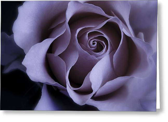 Pink Flower Prints Greeting Cards - May Dreams Come True - Purple Pink Rose Closeup Flower Photograph Greeting Card by Artecco Fine Art Photography