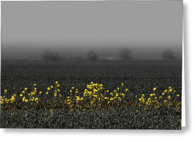 Misty Hills Farm Greeting Cards - May Flowers and Fog Greeting Card by Svetlana Sewell