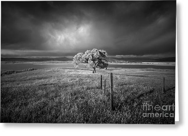 Back Country Greeting Cards - May Gray Greeting Card by Alexander Kunz