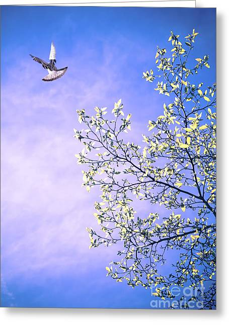 May Morning Greeting Card by Jan Bickerton