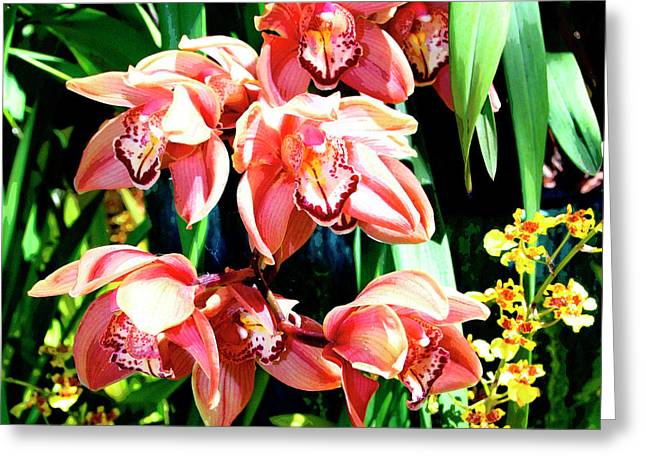 Featured Art Greeting Cards - JOY Orchids Greeting Card by William Dey
