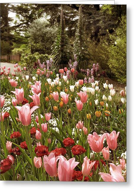 Seasonal Digital Greeting Cards - May Tulips Greeting Card by Jessica Jenney