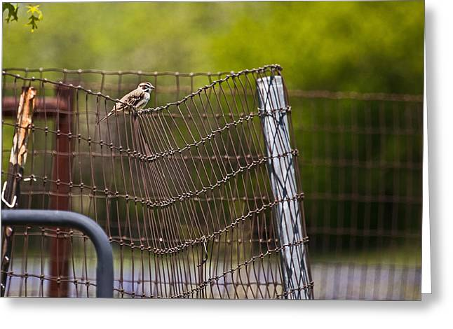 Crooked Fence Greeting Cards - Maybe I Should Start That Diet Greeting Card by Mark Alder