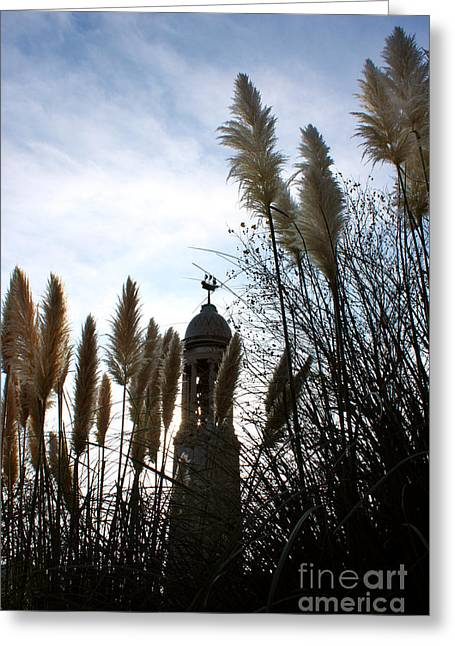 Terri Waters Greeting Cards - Mayflower Memorial Through The Pampas Grass Greeting Card by Terri  Waters