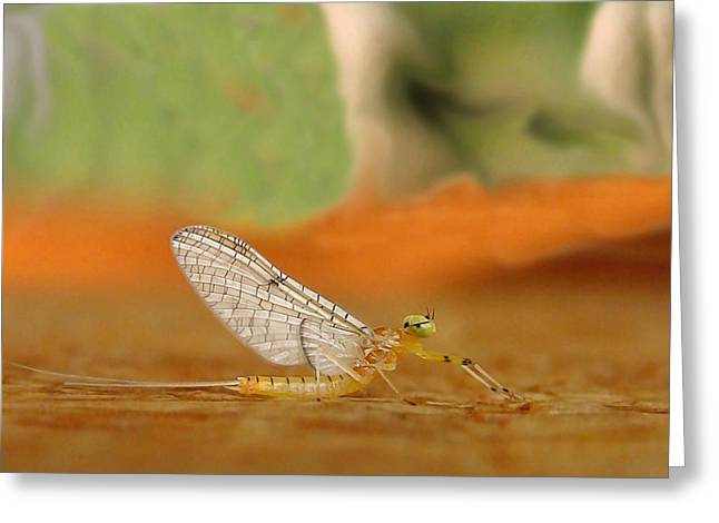 Artistic Photography Greeting Cards - Mayfly Art Greeting Card by Thomas Young