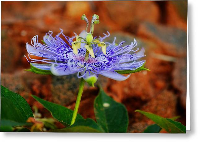 Super Real Greeting Cards - Maypop Flower Greeting Card by Adam LeCroy