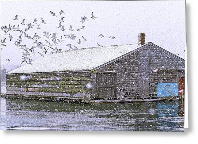Pickling Greeting Cards - McCurdys Pickling and Brining Shed Greeting Card by Marty Saccone
