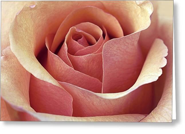 Salmon Pink Greeting Cards - McIntosh Greeting Card by Darlene Kwiatkowski