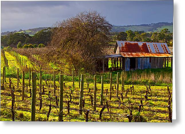 Vale Greeting Cards - McLaren Flat Vineyard Greeting Card by Bill  Robinson