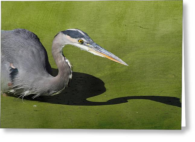 Hunting Bird Greeting Cards - Me and My Shadow Greeting Card by Angie Vogel