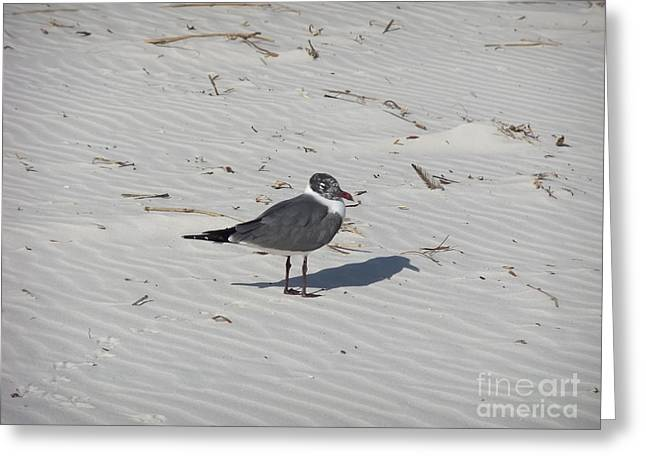 Ripples In The Sand Greeting Cards - Me and My Shadow Greeting Card by Deborah DeLaBarre
