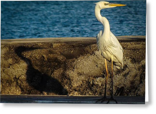 Nautical Birds Greeting Cards - ME and MY SHADOW Greeting Card by Karen Wiles
