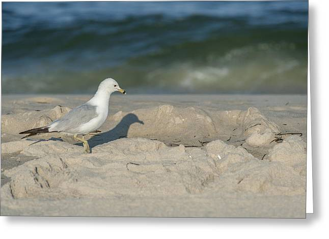 My Ocean Greeting Cards - Me and My Shadow Seaside Park NJ Greeting Card by Terry DeLuco