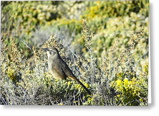 Point Lobos Greeting Cards - Meadow Bird at Point Lobos Greeting Card by Ellen Berrahmoun
