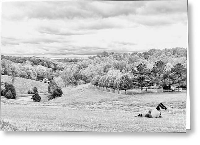 Tennessee Barn Greeting Cards - Meadow BW Greeting Card by Chuck Kuhn