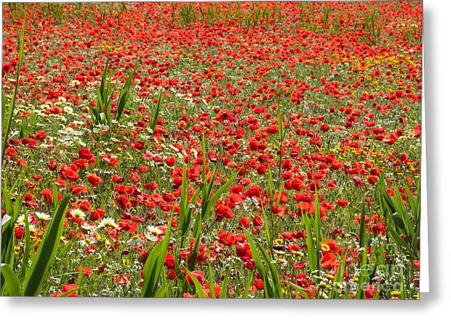 Meadow Covered With Red Poppies Greeting Card by Jose Elias - Sofia Pereira