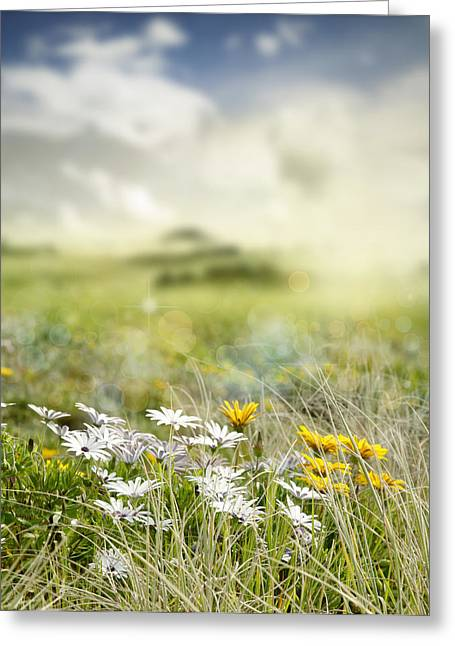 Beautiful Scenery Greeting Cards - Meadow flowers Greeting Card by Les Cunliffe