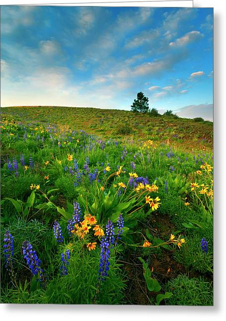 Central Washington Greeting Cards - Meadow Gold Greeting Card by Mike  Dawson