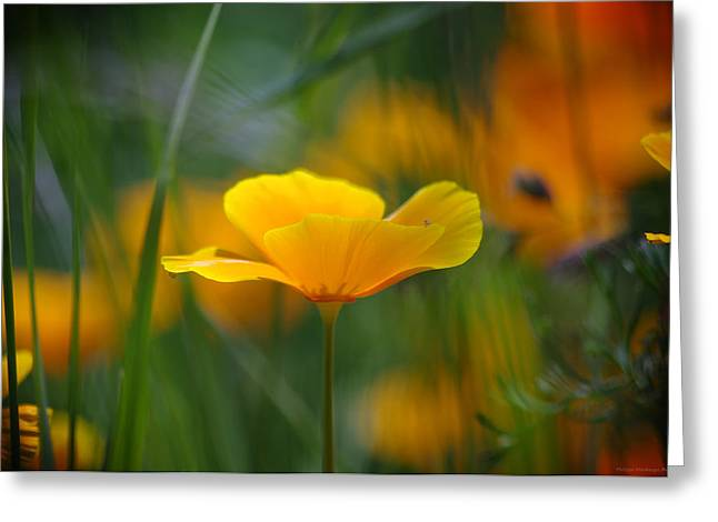 Haut-rhin Greeting Cards - Meadow gold Greeting Card by Philippe Meisburger