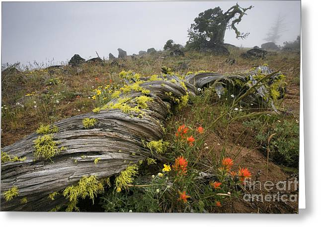 Siskiyou County Greeting Cards - Meadow In Fog, Or Greeting Card by Sean Bagshaw