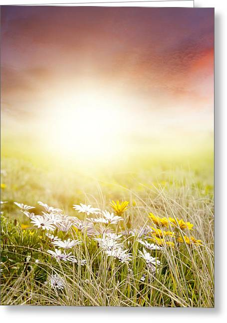 Garden Scene Digital Art Greeting Cards - Meadow Greeting Card by Les Cunliffe