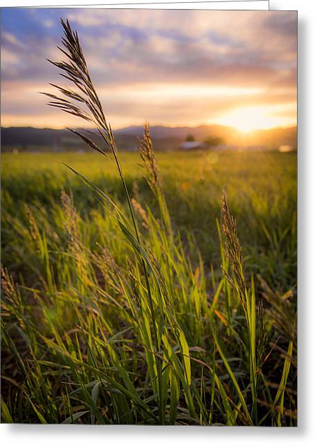 Idaho Photographs Greeting Cards - Meadow Light Greeting Card by Chad Dutson